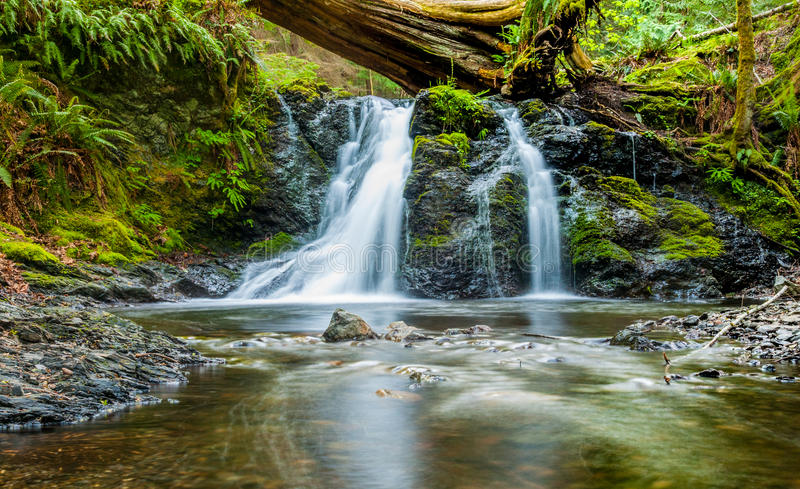 Timelaps Of Forest Stream During Daytime Free Public Domain Cc0 Image