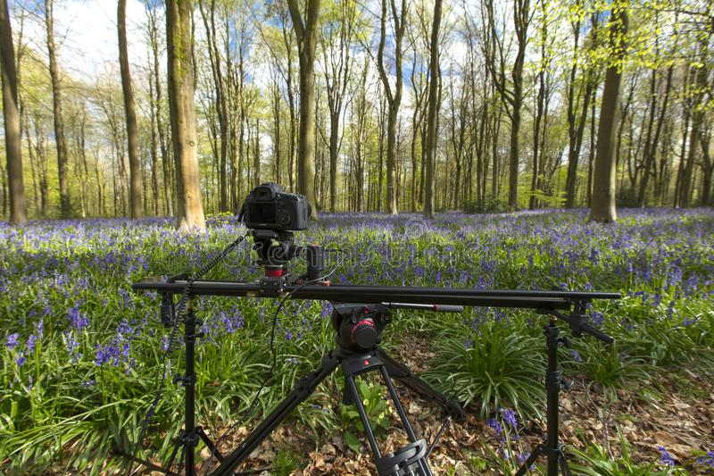 A timelapse camera set up amongst the bluebells and trees at West Wood, Wiltshire, UK - 29th April 2018 stock images