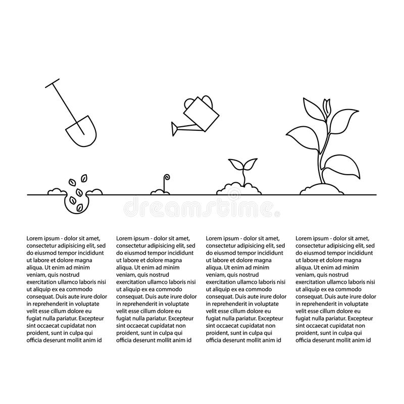 Timeline infographic of planting tree process stock illustration