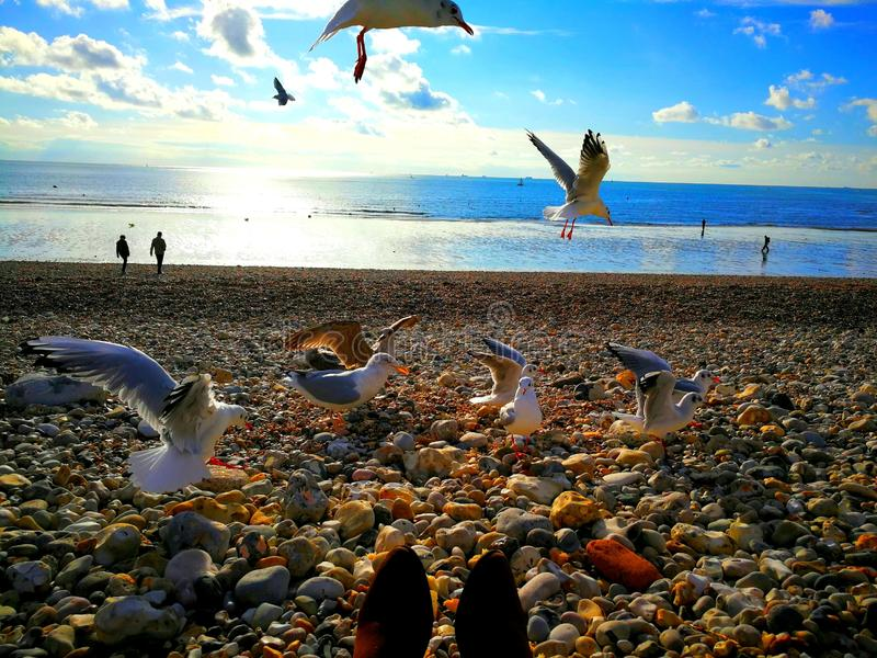 Timestoppingen av seagulls i blå himmel arkivfoto