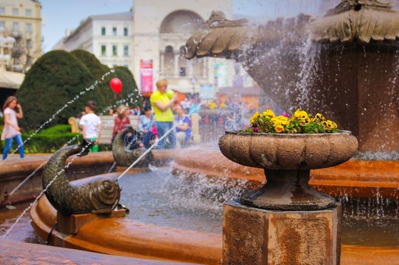 Timisoara - Pansies in einem Steinblumentopf am Fisch-Brunnen mit den Leuten, die ihren Weg im Hintergrund genießen stockbilder