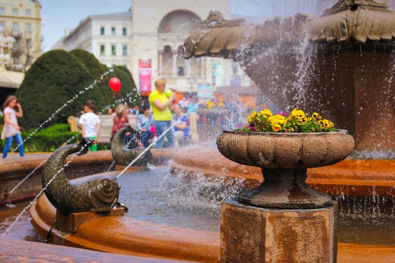Timisoara - Pansies in a stone flower pot at the Fish Fountain with people enjoying their walk in the background. Timisoara, Romania - Pansies in a stone flower stock images