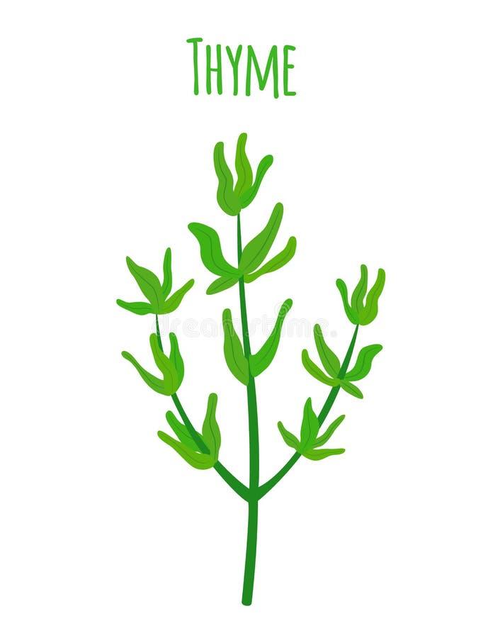 Timjan organisk krydda, vegetarisk näring Tecknad filmlägenhetstil också vektor för coreldrawillustration royaltyfri illustrationer