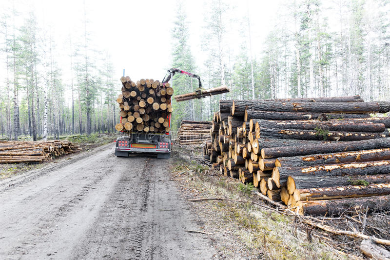 Timmerlastbil på den svenska grusvägen royaltyfria bilder