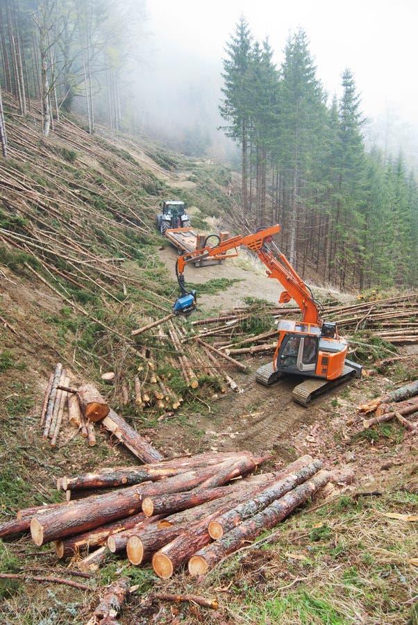Timmerplockning i Österrike arkivbild