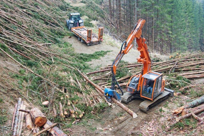 Timmerplockning i Österrike royaltyfri foto
