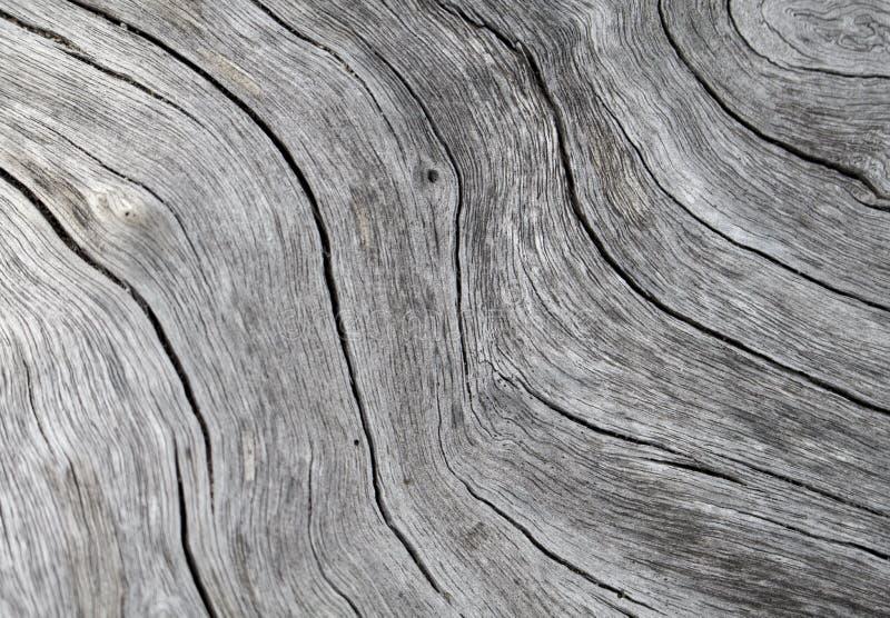 Timmertexturslut upp fotoet Vit och grå wood bakgrund royaltyfria bilder