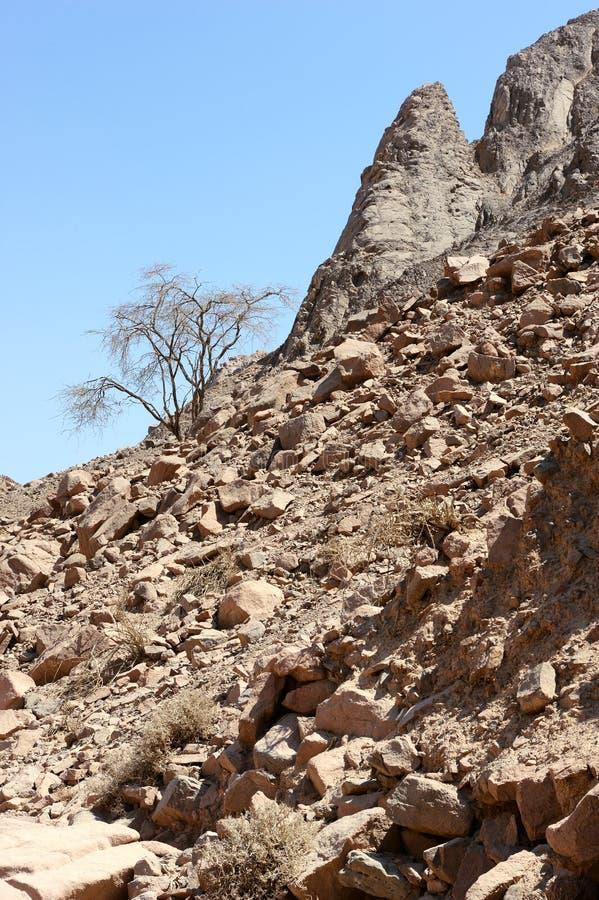Timna Nationalpark lizenzfreies stockbild