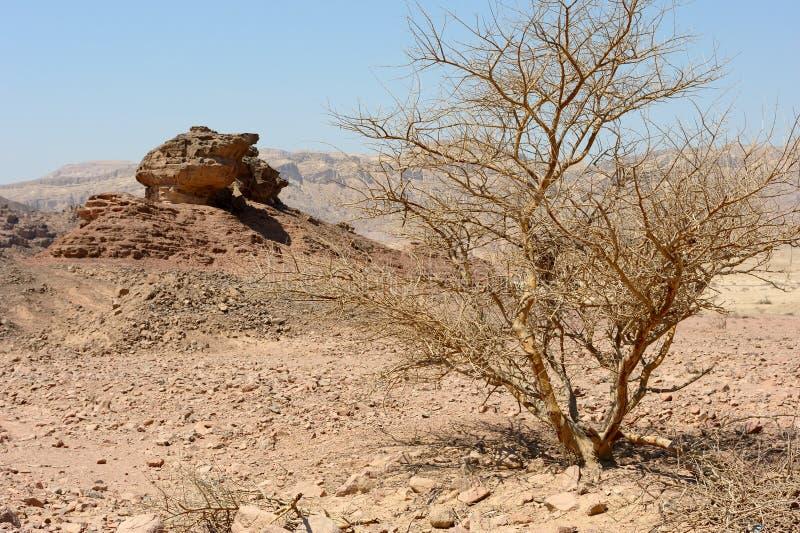 Timna Nationalpark lizenzfreie stockbilder