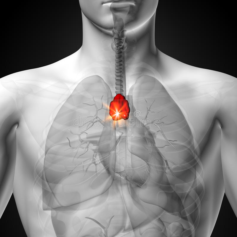 Famoso Anatomía Masculina De órganos Festooning - Anatomía de Las ...