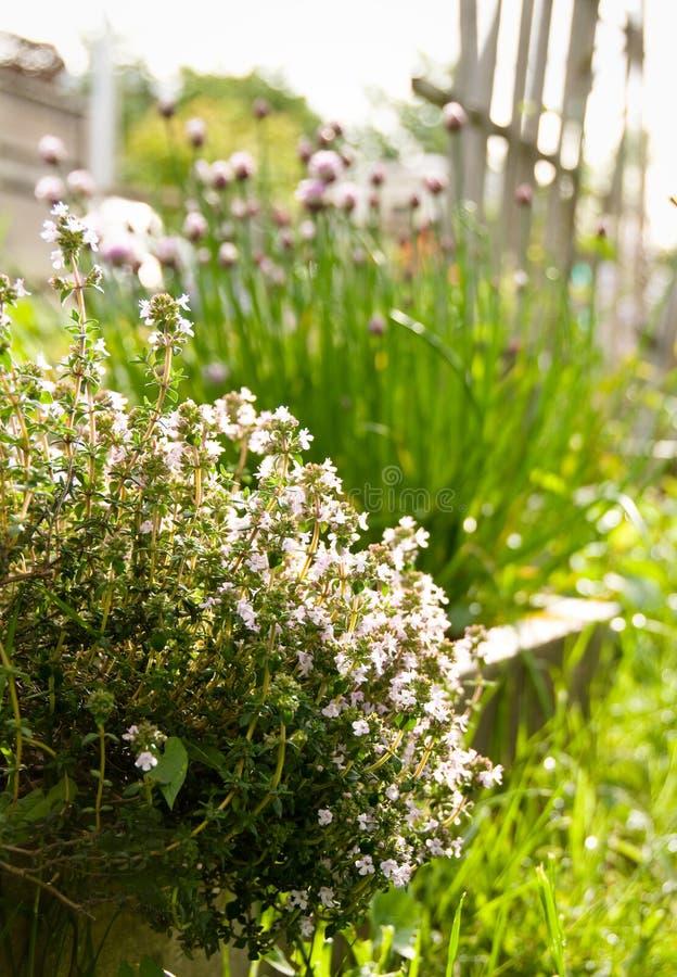 Timo in giardino pieno di sole fotografia stock libera da diritti