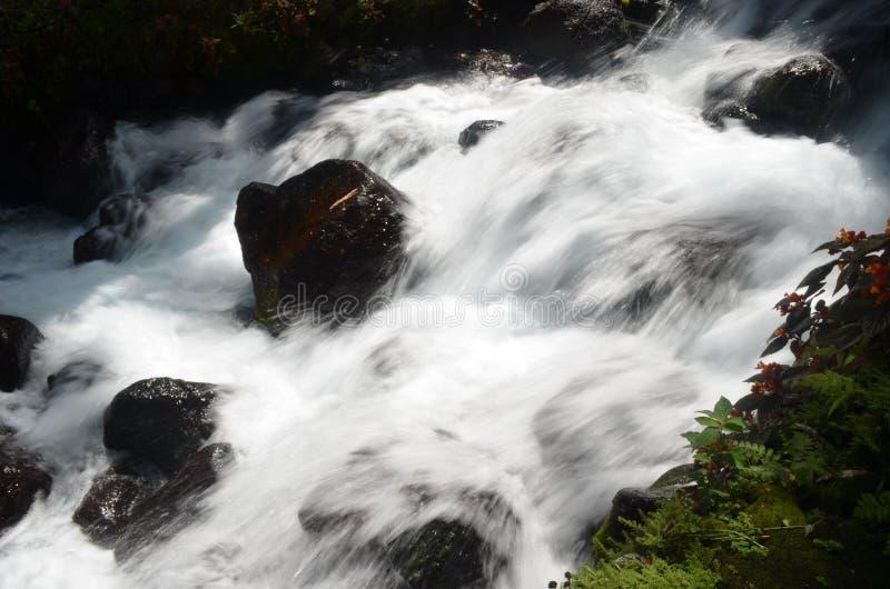 TimogaBronwater royalty-vrije stock foto's