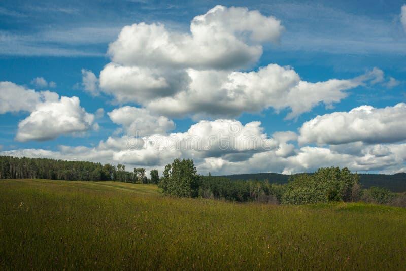 Timothy Meadow sob um céu azul com nuvens inchado imagens de stock