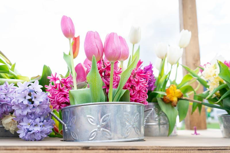 Tin flower pots with a floral arrangement of tulips and other flower varieties in pink, white, yellow and bright green stems. Flower pots with a floral royalty free stock photography