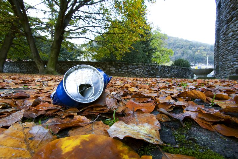 Download Tin among the leaves stock photo. Image of fogioline, natural - 9797098