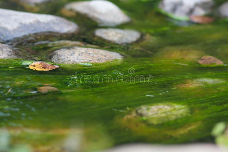 Tina in the water. water and stones in the. Lake. photo for your design. sheet horizontal orientation stock photo