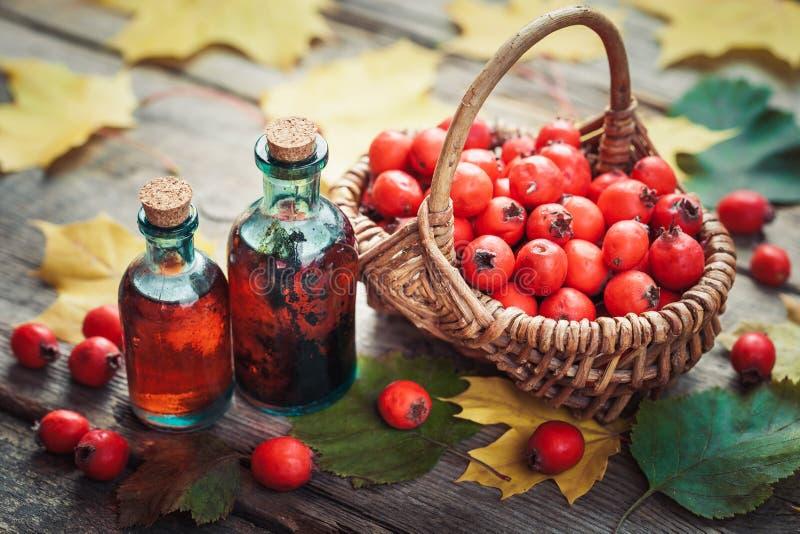 Tincture butelki głogowe jagody, dojrzali cierniowi jabłka obraz royalty free