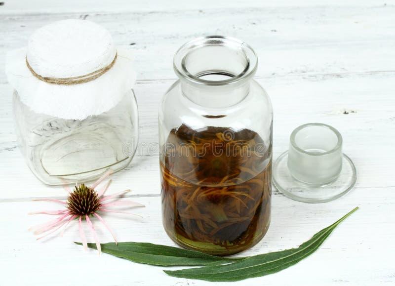 Tincture od kwiat głów wąski liść purpur rożka kwiat przygotowywający dla filtrować fotografia royalty free