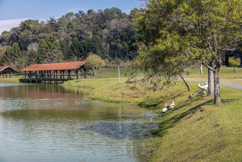 Tingui公园-库里奇巴,巴拉那,巴西 免版税库存图片