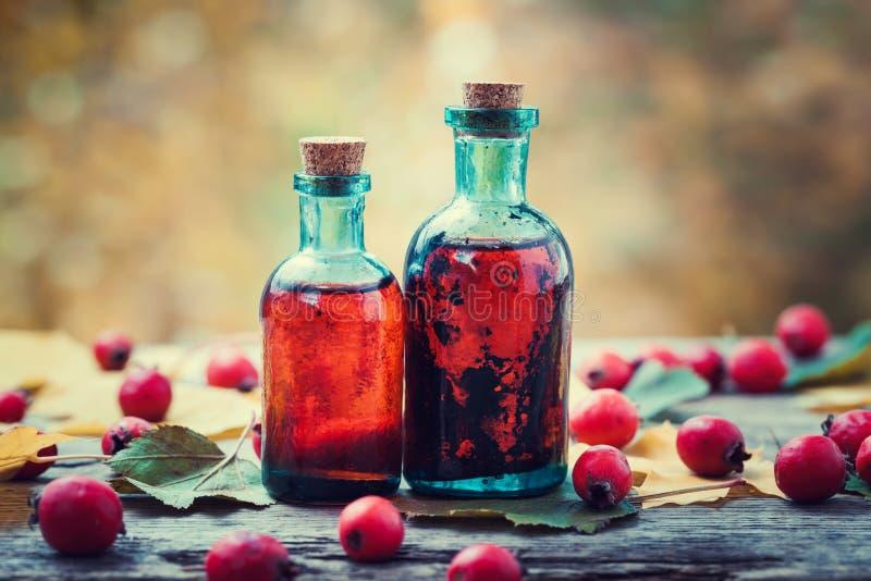 Tinkturflaskor av hagtornbär och röda taggäpplen arkivfoto