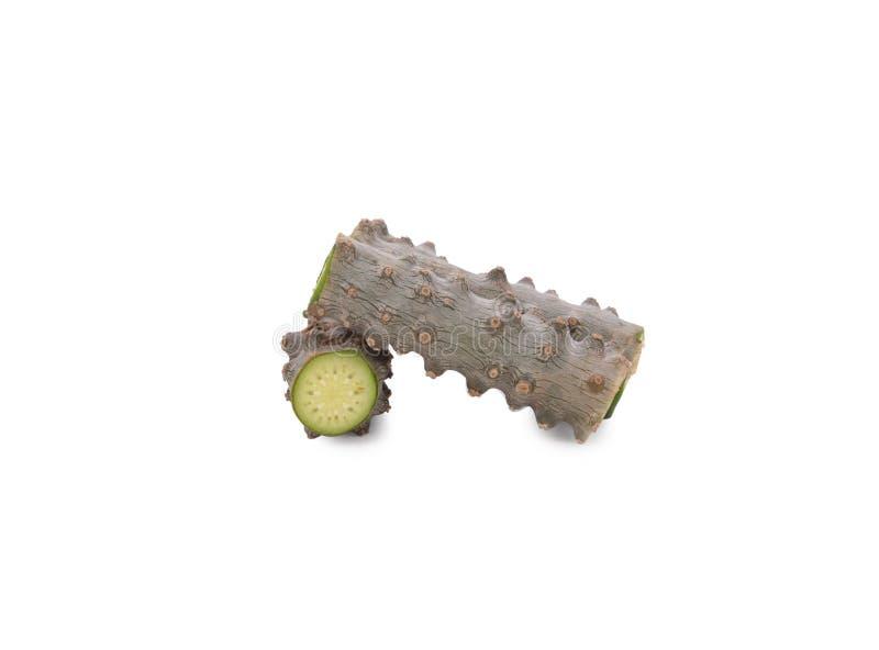 Tinospora cordifolia herb απομονωμένο σε λευκό φόντο στοκ εικόνα με δικαίωμα ελεύθερης χρήσης