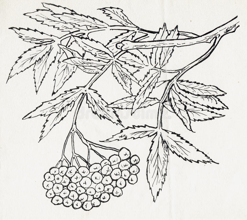 Tinta que dibuja un árbol fotos de archivo