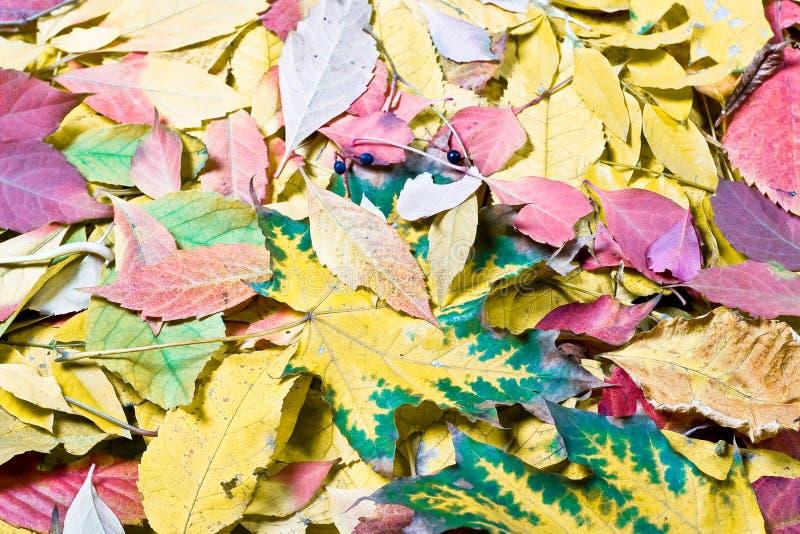 Tinte di autunno fotografia stock libera da diritti