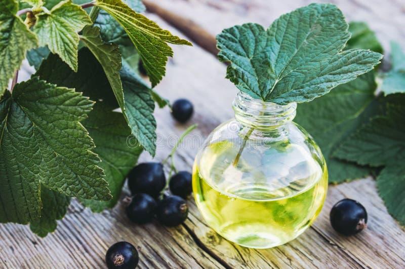 Tinte medicinal con la grosella negra en una botella de cristal Extracto de la medicina anticatarral de grosella negra foto de archivo