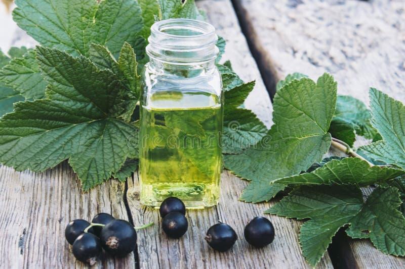 Tinte medicinal con la grosella negra en una botella de cristal Extracto de la medicina anticatarral de grosella negra imagen de archivo libre de regalías