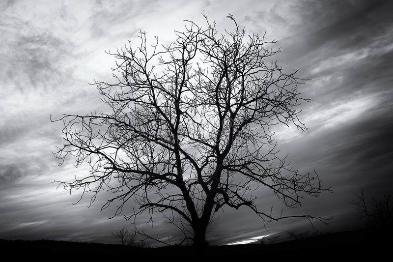 Tinted black and white image of bare tree stock image