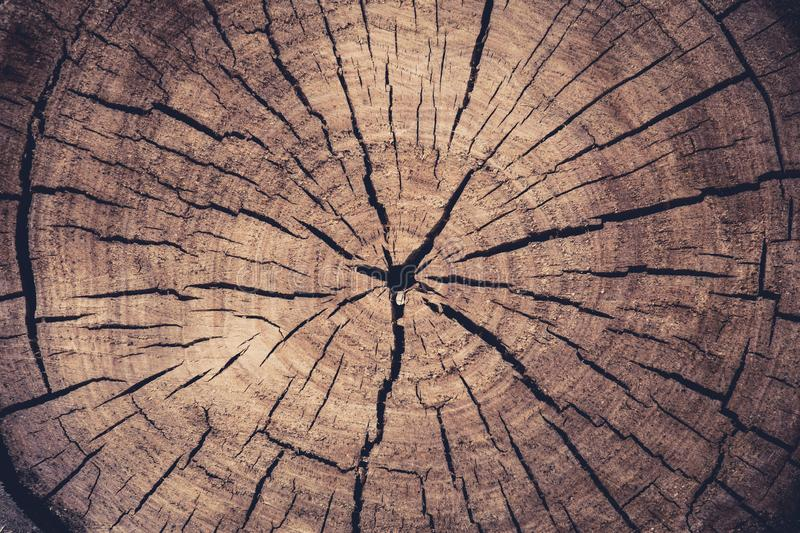 Tinted photo of a wooden log end cut, annual rings and cracks coming from the center, abstract background texture. Poplar cut stock image