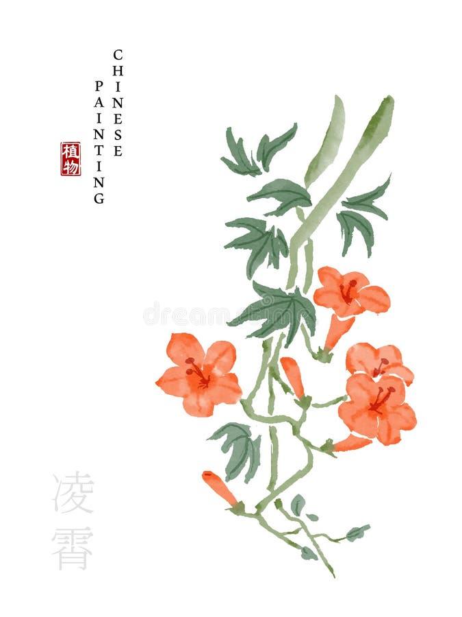 Tintenfarbenkunstillustrations-Naturanlage des Aquarells chinesische vom Buch der chinesischen Trompetenkriechpflanze der Lieder  vektor abbildung