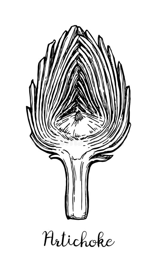 Tintenskizze der geschnittenen Artischocke lizenzfreie abbildung
