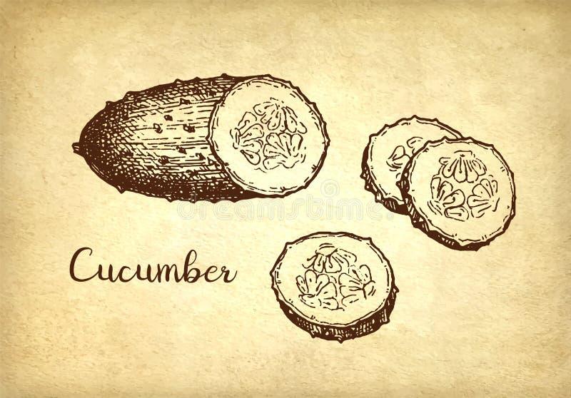 Tintenskizze der Gurke stock abbildung
