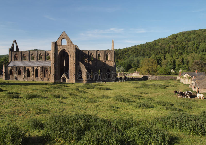 Download Tintern Abbey Landscape Royalty Free Stock Image - Image: 21341066