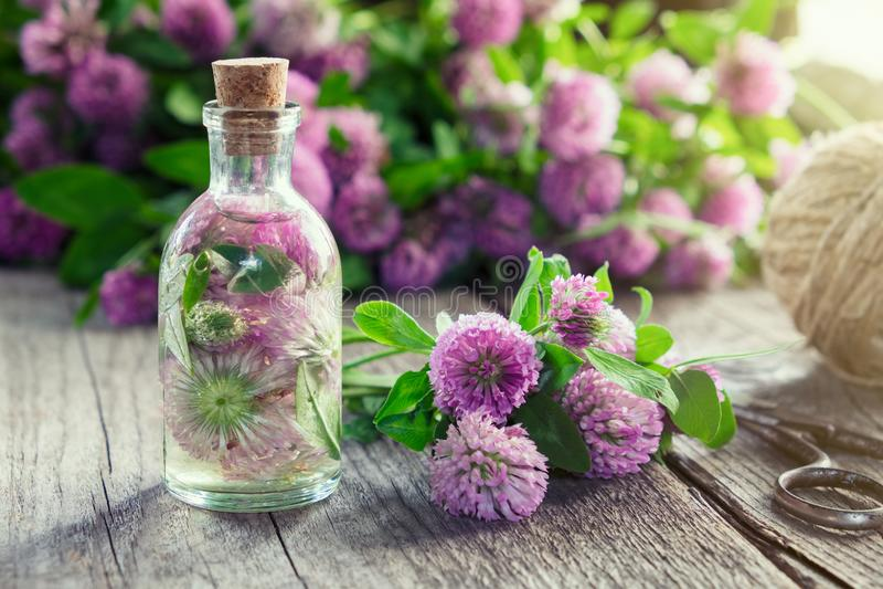 Tintura do trevo ou infusão e grupo das flores do trevo fotos de stock royalty free
