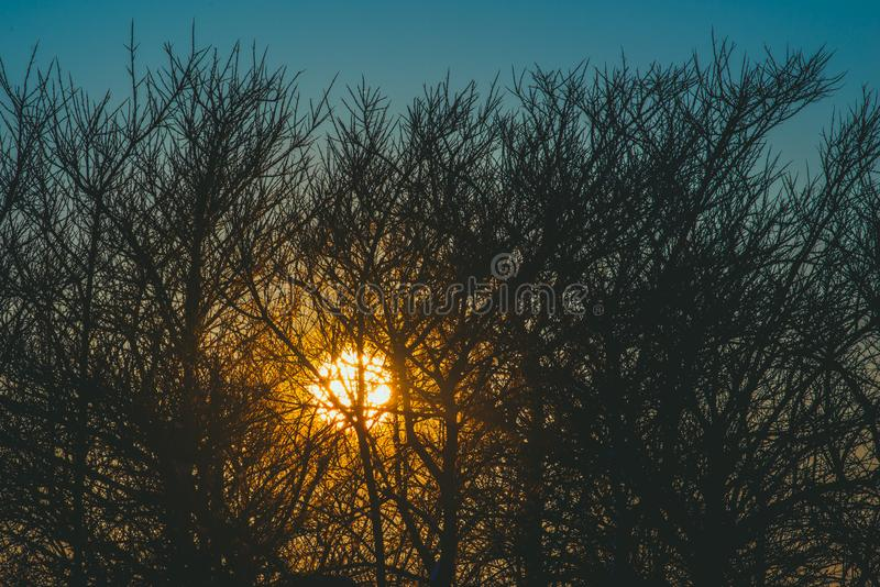 Tiny bare branches and sun shine through. At sunset time stock image