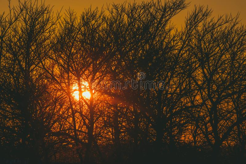 Tiny bare branches and sun shine through. At sunset time stock photography