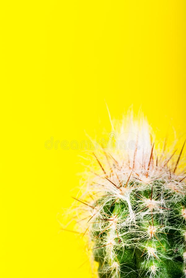 Tiny Cactus in the Pot on Bright Neon Background. Saturated Imag stock photography