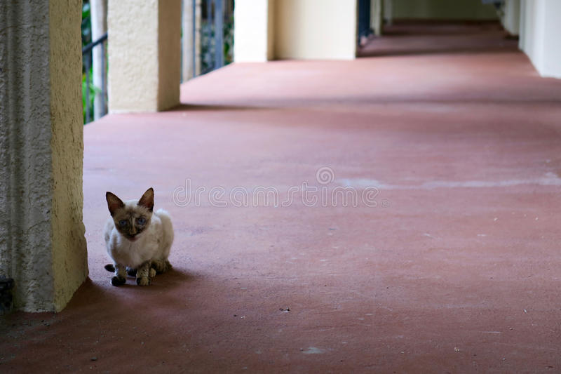Tiny Cat, Big World. A skinny little feral cat sitting a big vacant building hallway. Conceptual image for the disadvantaged, underdog in big world, against the stock photos