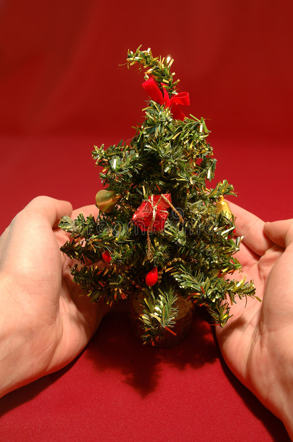 Download Tiny Christmas tree stock photo. Image of good, lovely, protecting - 50408