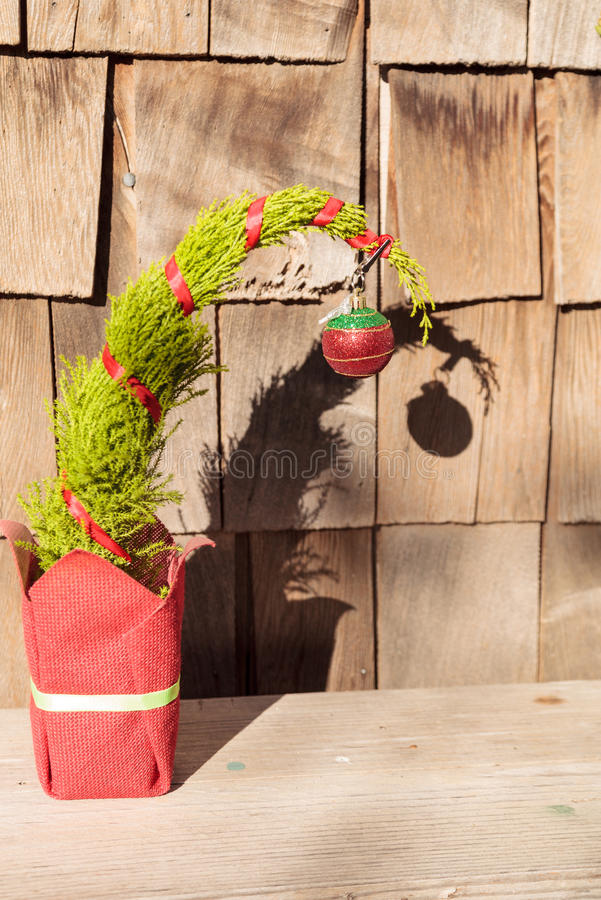 Tiny Christmas tree stock images