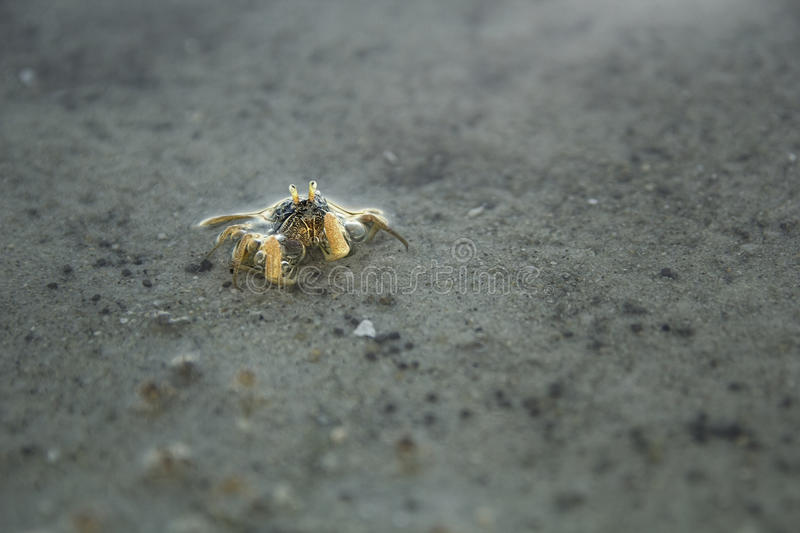 Tiny crab royalty free stock photography