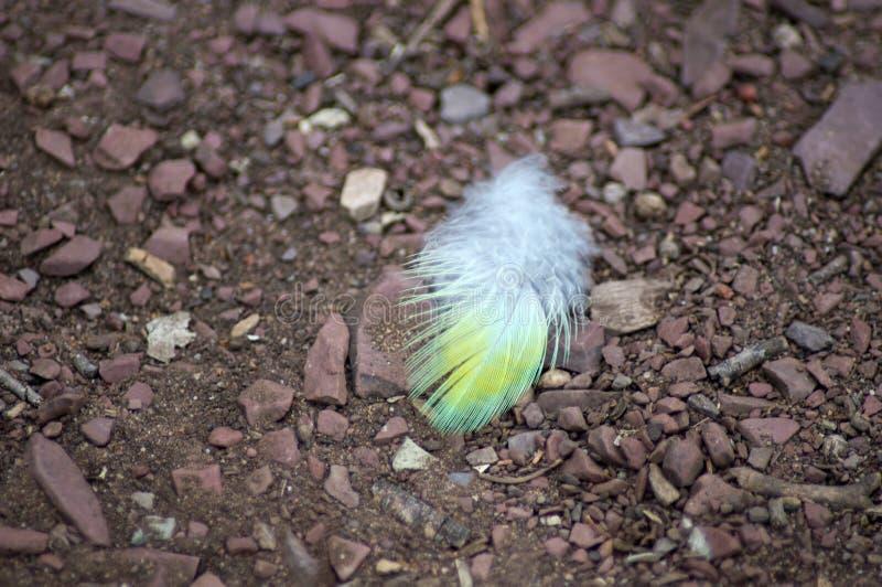 Tiny feather on ground, Wilpena Pound, SA, Australia. Tiny feather on ground, Wilpena Pound, Flinders` Ranges. South Australia, Australia stock images