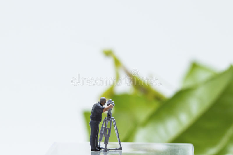 Tiny figurine of cameraman filming green leaves and mantis on background. Mantis silhouette on green leaf. Little cameraman film exotic animal. Dangerous royalty free stock photography