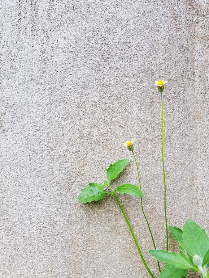 Tiny flowers on concrete wall royalty free stock image