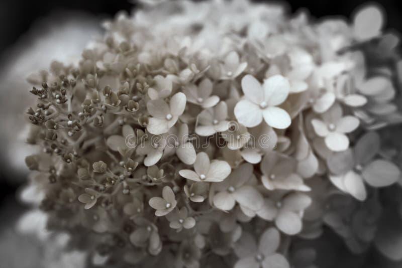 Tiny Flowers royalty free stock photography