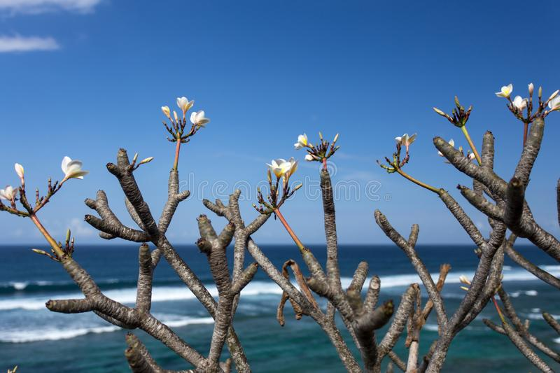 Tropical Flowers at the Beach. Tiny flowers on top of woody branch with the sea and the sky as the backdrop stock photos