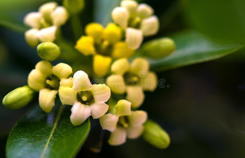 Tiny flowers royalty free stock photography