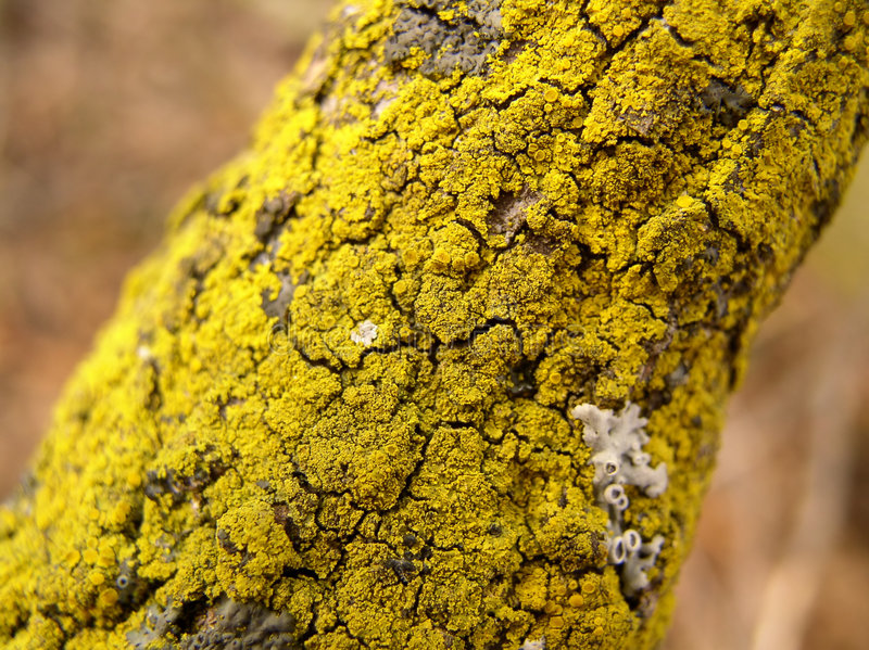 Download The tiny forest stock photo. Image of yellow, green, decay - 42378